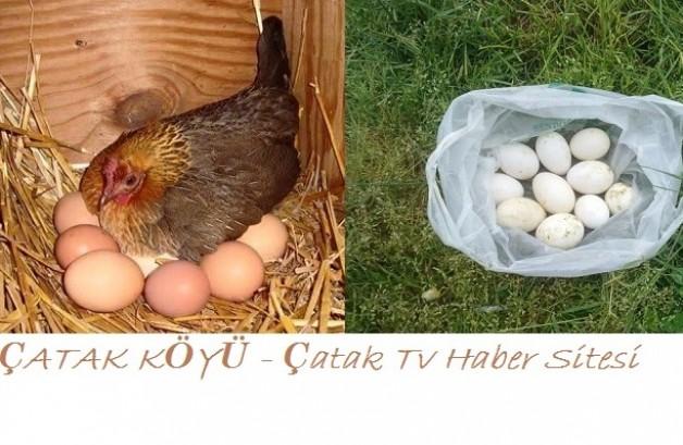 Köy yumurtası 1 tl.