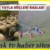 Çatak Köyünden Pinti Yaylasına Göçler Başladı.